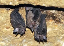 Bats El Mundo Verde Travel