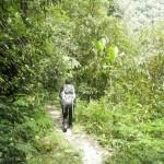 El Mundo Verde Travel